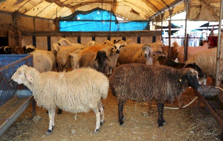 23-03-2020 tırmıl hayvan pazarı kaldırıldı