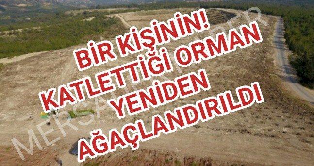 Mersin'de tahrip edilen ormanlık alan yeniden ağaçlandırıldı