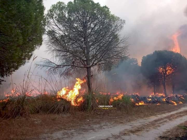 Tarsus'ta Yangın!..