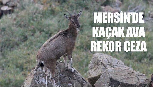MERSİN'DE KAÇAK AVA REKOR CEZA